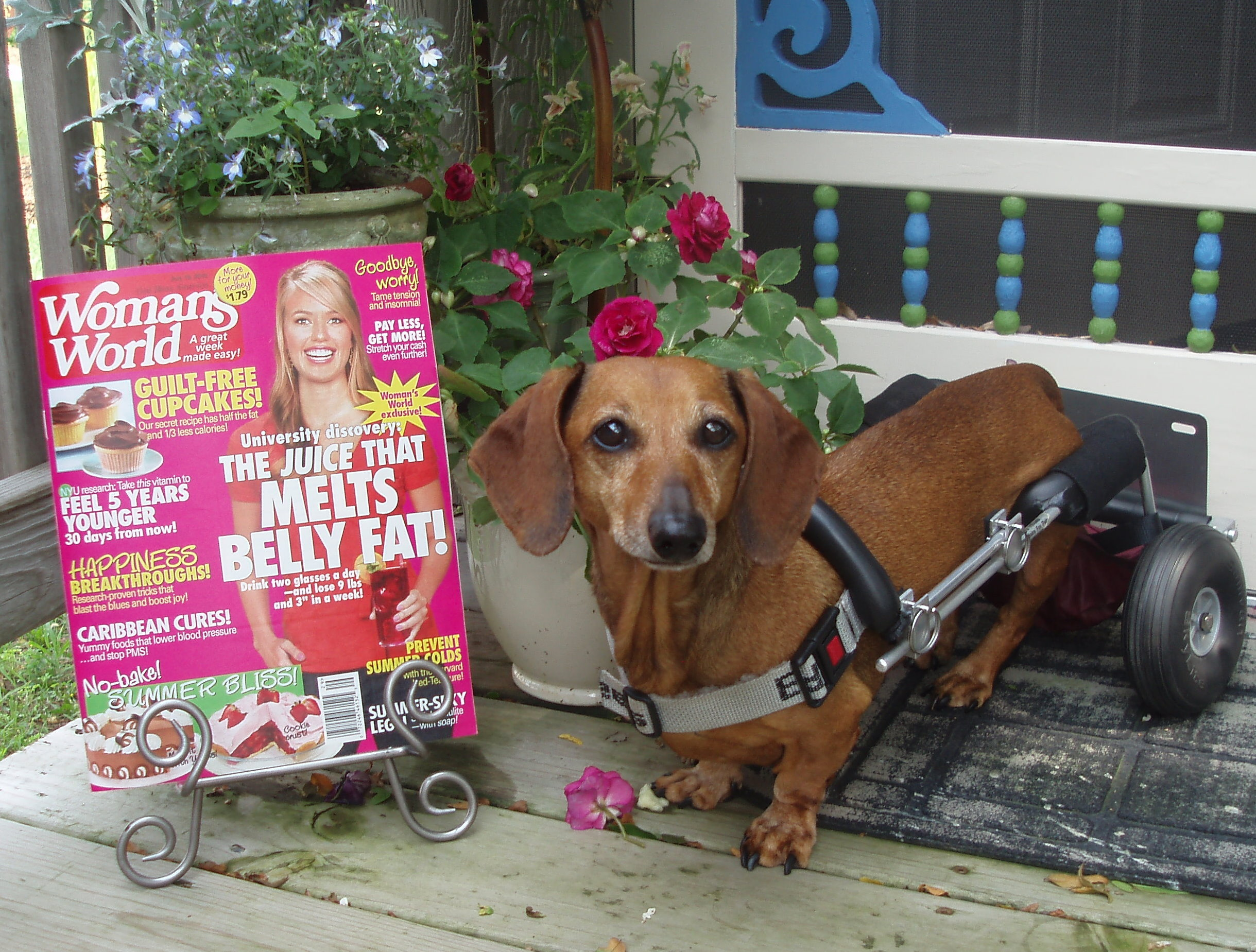 Frankie featured in Woman\'s World Magazine July 2010