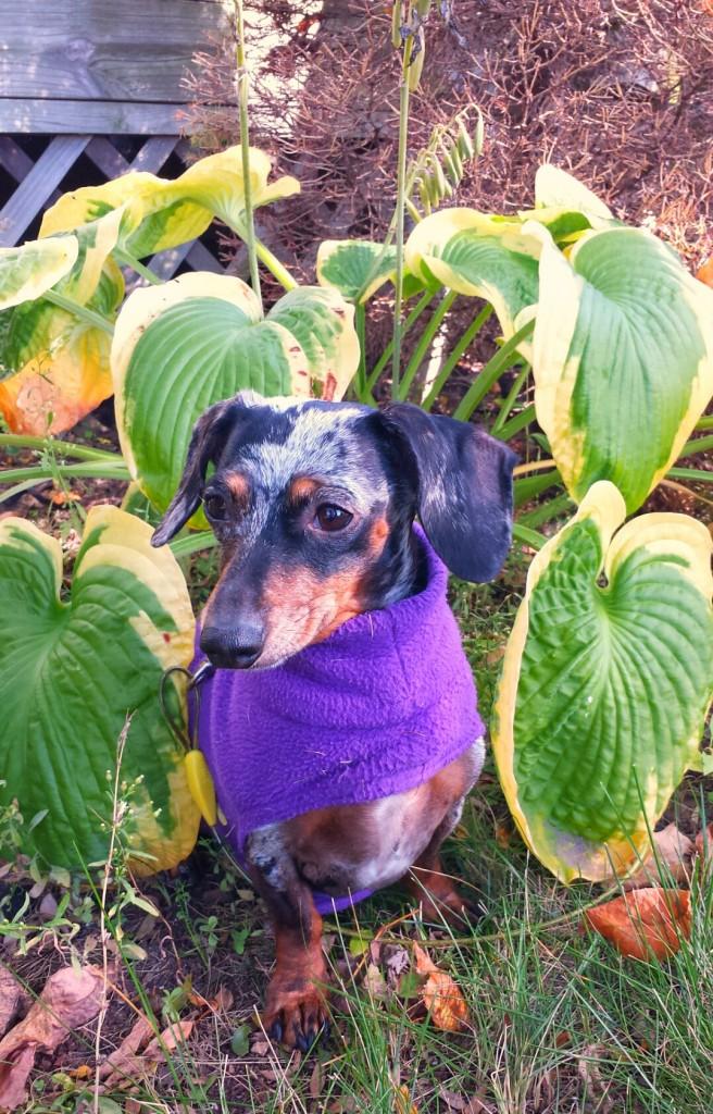 gidget garden helper
