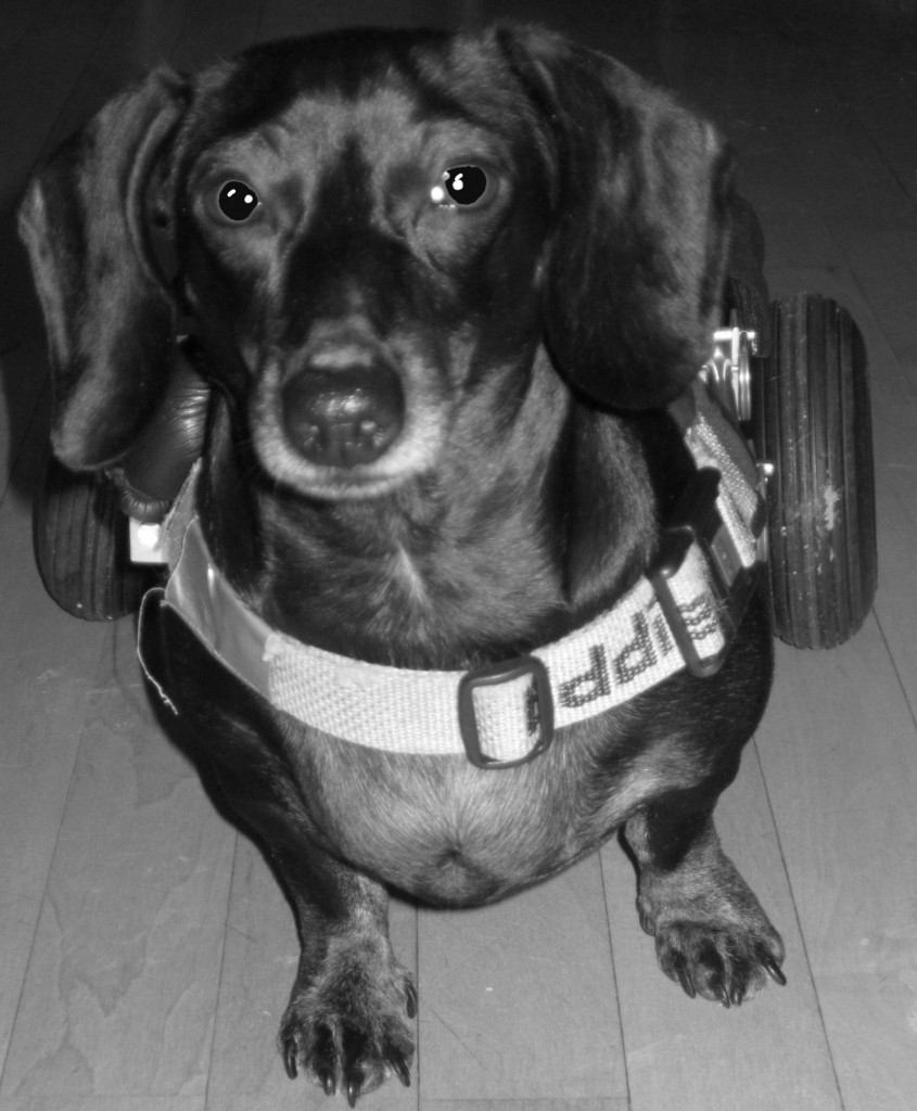 wheelchair joie night