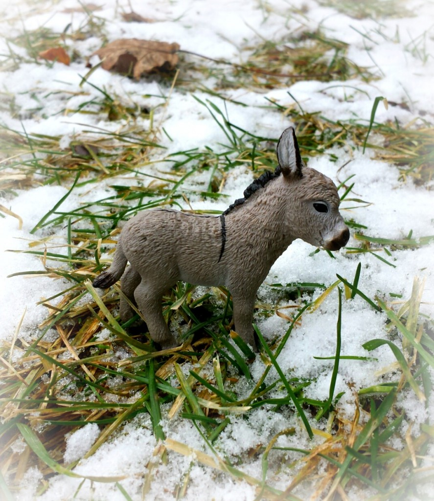 delores the donkey