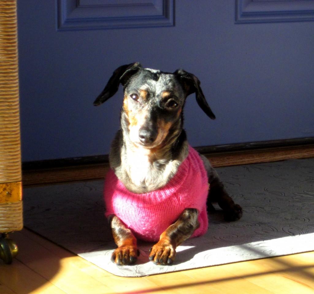 Wednesdays with the Wisdom of Dog: Simplicity