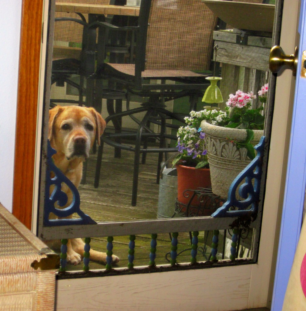 Oh Kylie: Outside Dog, Looking In