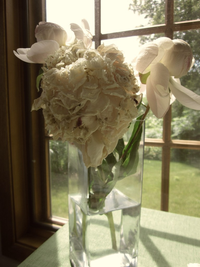 The Beautiful Death of a Peony