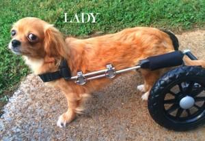 lady-s-300x207
