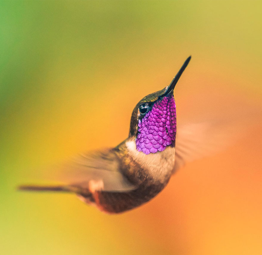 I AM a Hummingbird. Thank You Elizabeth Gilbert.