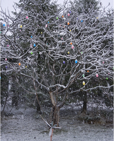 On Winter Egg Trees, Transition, and Working with Spirit of the Horse