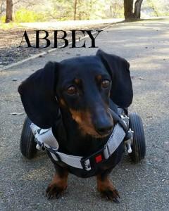 abbey-3-e-240x300