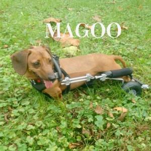 magoo-e-300x300