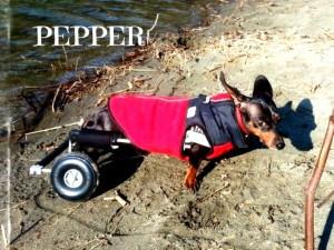 pepper-e-300x225