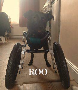 roo-e-260x300