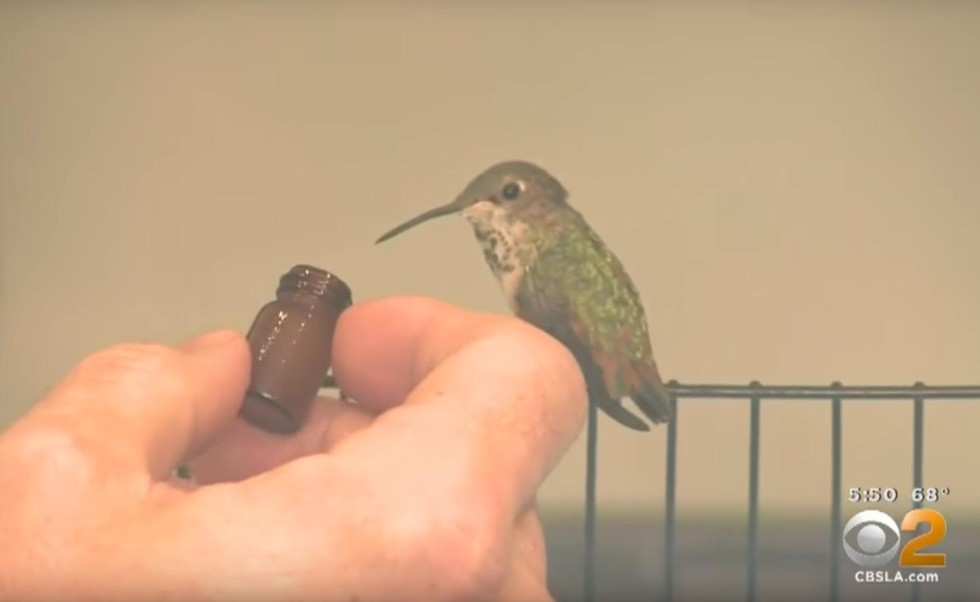 The Friendship Between Man, Hummingbird and Dog -- Plus Winner of of Book Giveaway