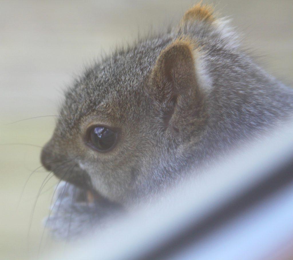 Squirrel Flower