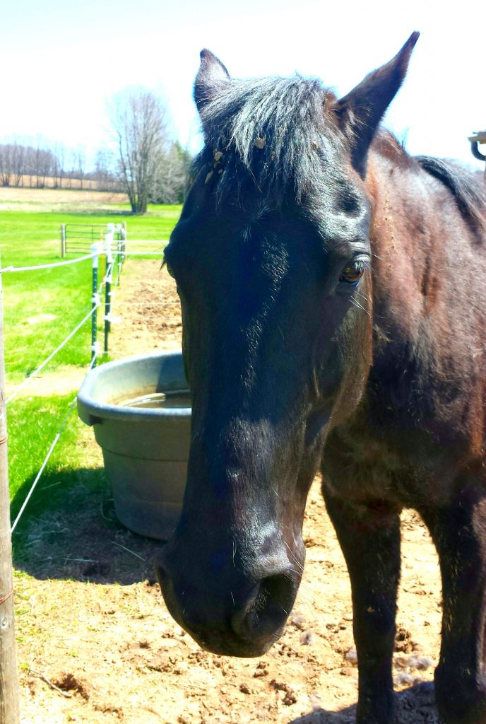 Meet Hank from LaValley Equine Sanctuary - My Earth Day Treat!