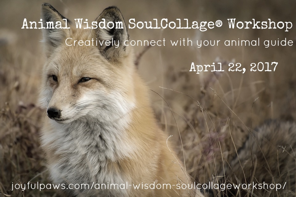 Animal Wisdom SoulCollage®Workshop