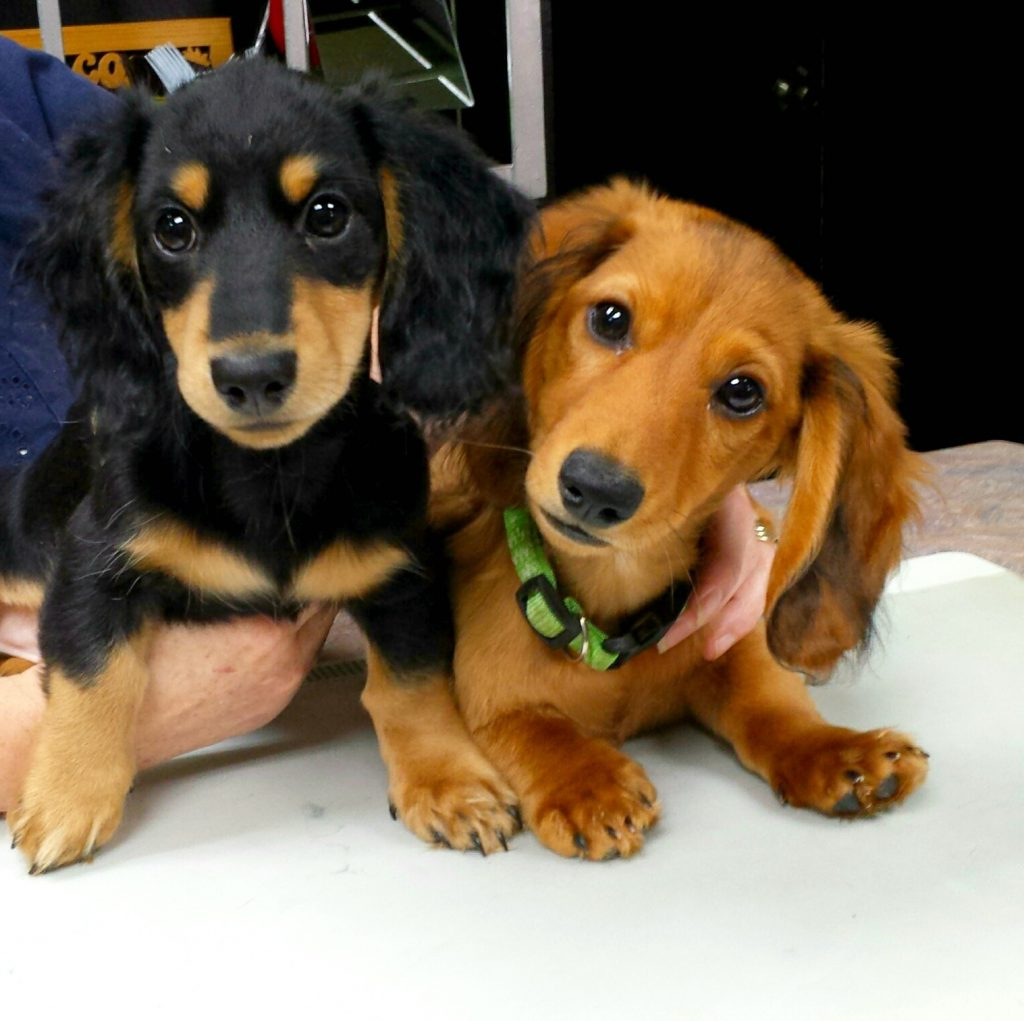 Working Weenies in Training. Come Meet Them!